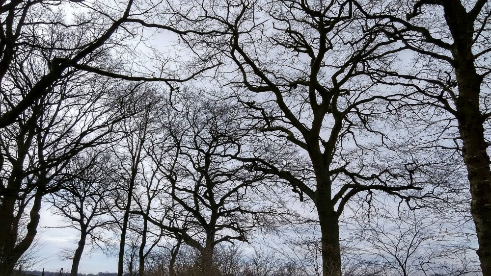 Baumimpression, Stormarn im März
