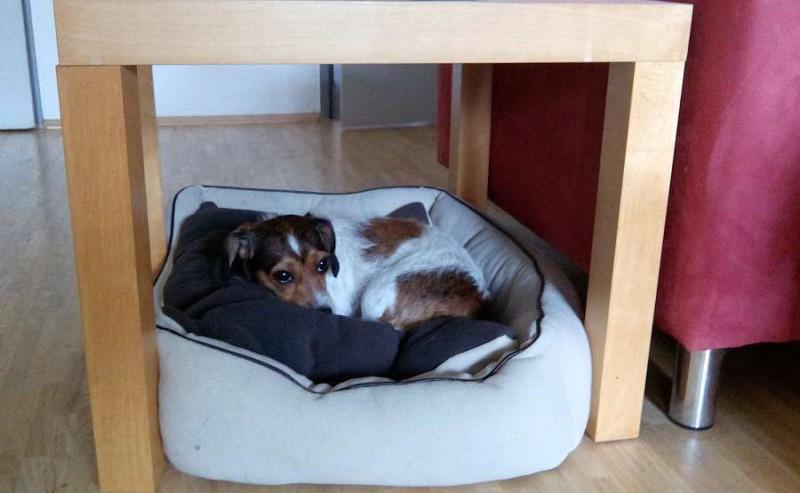 Sie hat ihren Lieblingsschlafplatz gefunden